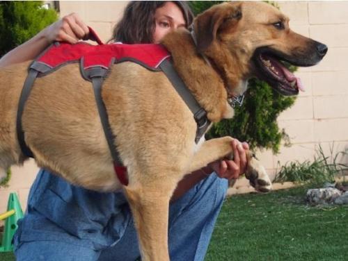 La AEFA distribuye un díptico sobre Fisioterapia aplicada en animales
